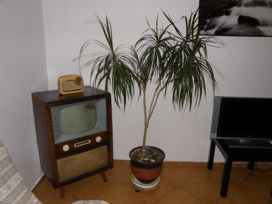 Forum Fernseher